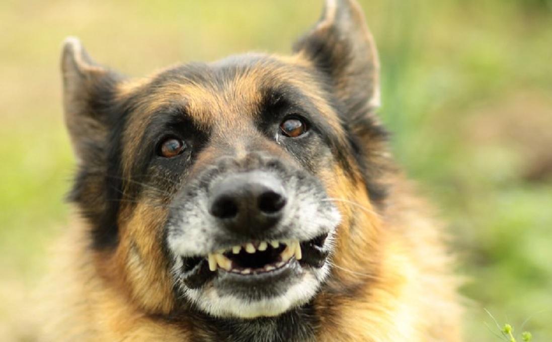 Mężczyznę, który chciał popełnić samobójstwo rzucając się pod pociąg - uratował pies funkcjonariuszy Straży Ochrony Kolei. Na pomoc człowieka nie było już czasu - a pies zareagował błyskawicznie(fot - poglądowe - .sxc.hu-freeimages.com)