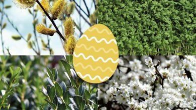 Bukszpan, rzeżucha, tarnina, wierzba, czyli Wielkanocny zielnik