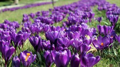 Wiosna zawitała do nas na dobre. Potrwa do 21 czerwca
