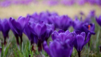 Wiosna ach to Ty! [PROGNOZA POGODY] Nadciąga kolejna zmiana pogody