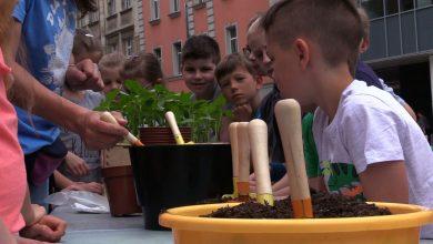 Katowice pełne słoneczników! Ruszyła akcja Fundacji Arka