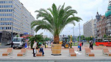 Na Rynku w Katowicach będzie znowu jak na Majorce. Leżaki są, woda jest - będą i palmy. Bo palmy wracają do Katowic! (fot.archiwum)