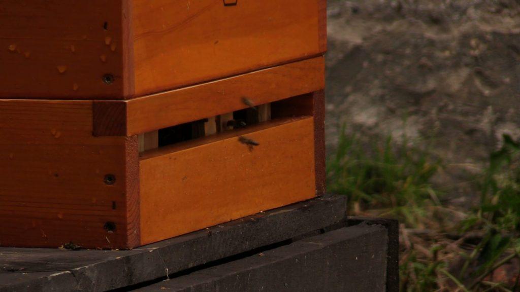 W Muzeum Śląskim w Katowicach powstała specjalna pasieka. Pszczoły będą robiły miód i dadzą się pogłaskać ;-)