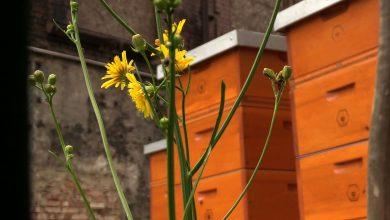 W Muzeum Śląskim powstała pasieka. Pszczoły będą dawały muzealny miód? ;-)