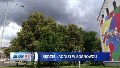 Sosnowiec: W mieście powstanie mural nawiązujący do lasu [WIDEO] (fot.mat.TVS)