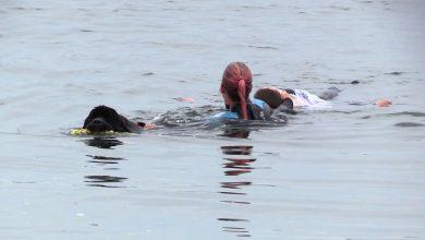 Śląskie: Psy z WOPR ratują tonących ludzi! Właśnie miały swoje ćwiczenia