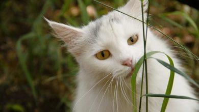 Rośliny trujące dla kotów (fot. pixabay.com)