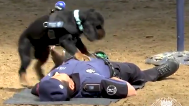ies udziela pierwszej pomocy policjantowi! (fot. twitter Policia de Madrid)