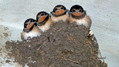 Katowice: Znęcał się nad ptakami. Wkładał im do dzióbków papierosy i odpalał (fot.poglądowe/www.pixabay.com)