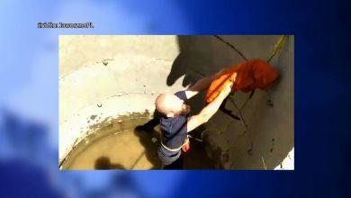 Śląskie: Zwierzęca seria, czyli zwierzaki w tarapatach. Służby ratowały sarnę i psa
