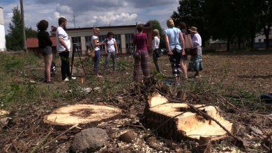 Na tyskim osiedlu Balbina wycinka drzew zbulwersowała mieszkańców