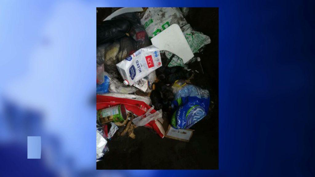 Ocalał tylko jeden! W Dąbrowie Górniczej ktoś wyrzucił na śmietnik szczeniaki!