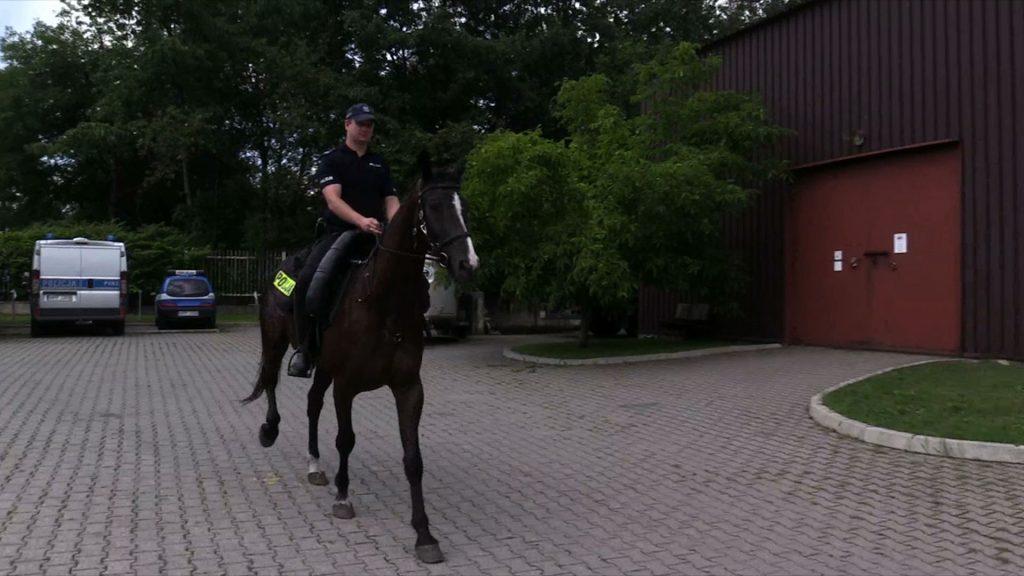 Policja z Chorzowa szuka funkcjonariusza, który kocha konie. Potrzebny od zaraz!