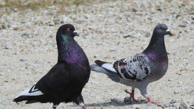 Brutalny mord na gołębiach. Sprawcy grozi do 5 lat więzienia (fot.poglądowe/www.pixabay.com)