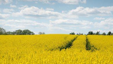W dalszym ciągu polskim rolnikom zagraża susza. [fot. www.pixabay.com]