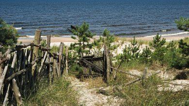 Sinice w Bałtyku! Zamknięto nadmorskie kąpieliska /www.pixabay.com)