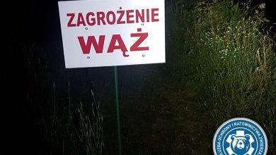 Zakończono poszukiwania pytona znad Wisły! (fot. Animal Rescue Poland)