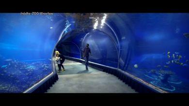 Oceanarium w Rudzie Śląskiej nie powstanie. Miasto musiało unieważnić konkurs na zagospodarowanie działki znajdującej się przy ulicy 1 Maja