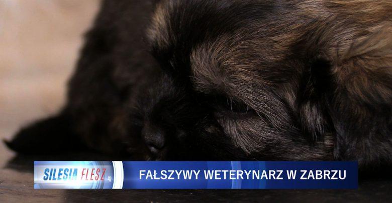 Zabrze: Fałszywy weterynarz w rękach policji. Nie wiadomo, czym szczepił zwierzęta [WIDEO] (fot.mat.TVS)