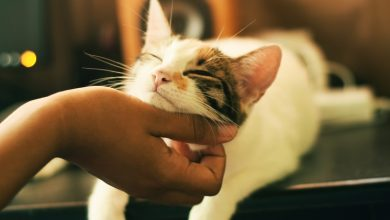 Adopcja kota (fot. unsplash)