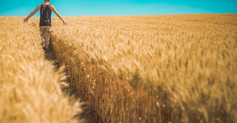 Będzie pomoc i odszkodowania dla rolników? Susza rujnuje zbiory w całym kraju! (fot.poglądowe - pixabay.com)
