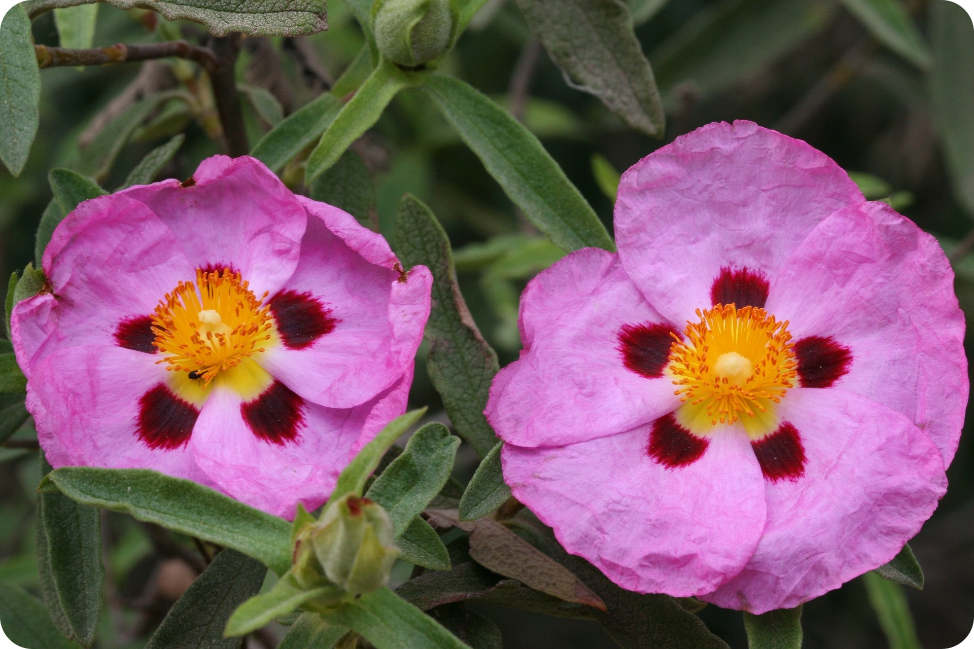 Herbaty ziołowe - właściwości (fot. pixabay.com)