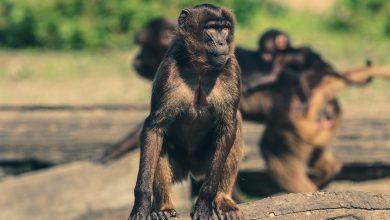 Atakuje małpia ospa! Przedostała się już do Europy (fot. poglądowe pixabay)