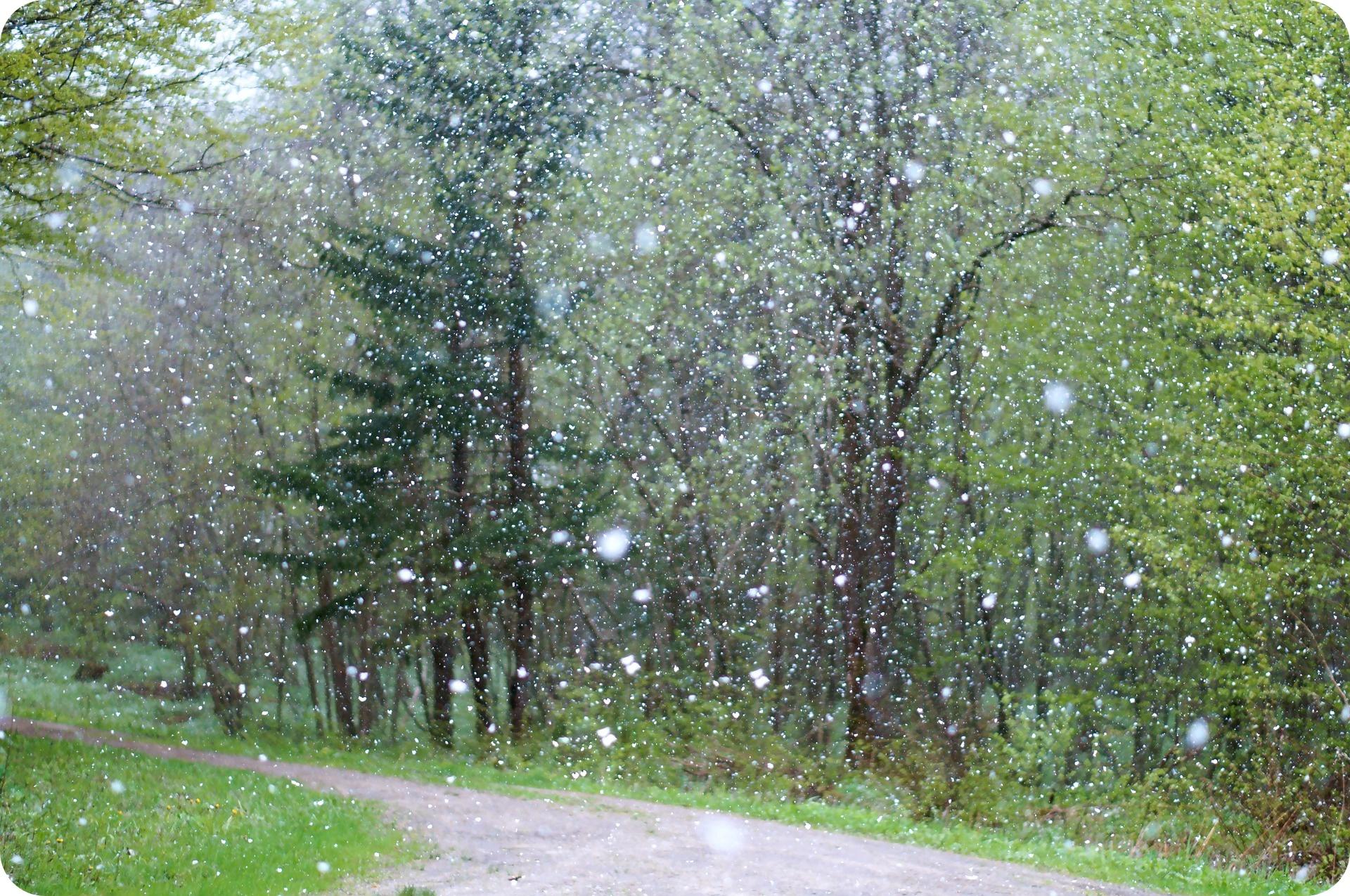 Jesień - sezon przeziębień? (fot. pixabay.com)