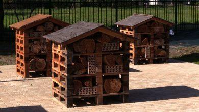 Centrum Edukacji Ekologicznej powstało w Katowicach. Są nawet domki dla owadów