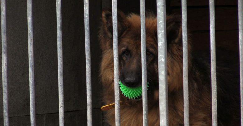 Mysłowice: Dramatyczny apel pracowników likwidowanego schroniska: Zaopiekujcie się naszymi zwierzętami!