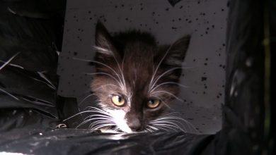 Pomóżmy im przetrwać zimę! Koty z Kociej namawiają ludzi do budowy domków dla kotów