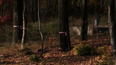 Tuż obok Parku Śląskiego powstanie nowe osiedle? Mieszkańcy alarmują o możliwej wycince drzew!