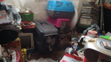 W takich warunkach [FOTO] trzymał w mieszkaniu około 20 kotów i psa. Sąsiedzi nie mogli znieść fetoru (fot.Straż Miejska Wrocław)