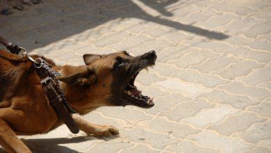 Kara 5 tys.zł. za psa bez smyczy to HIT czy KIT? Czy wyższe kary dla właścicieli psów będą wlepiane?(fot.poglądowe/www.pixabay.com)