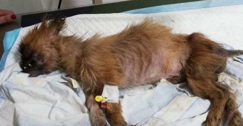 W sortowni śmieci znaleziono psa w związanym worku (fot. policja.pl)