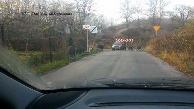 Śląskie: Dziki w miastach tylko do odstrzału? Samorządy przegrywają wojnę z dzikami