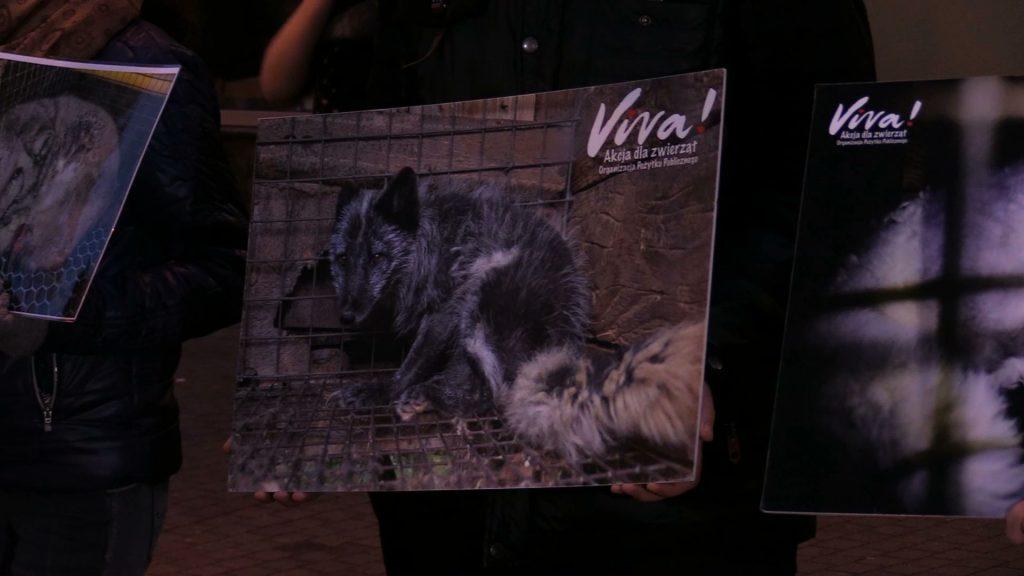 """""""Futra to śmierć!"""" - przekonywali dzisiaj wolontariusze w centrum Katowic, działający na rzecz praw zwierząt"""