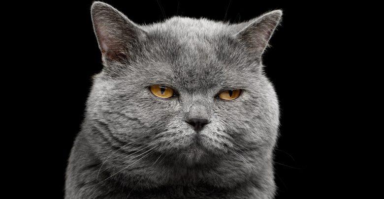 zdjęcia kotów nastoletni kutasy