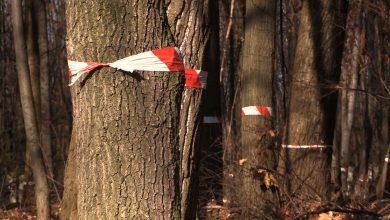 Petycja za petycją. Coraz więcej przeciwników budowy osiedla Green Park Silesia przy Parku Śląskim