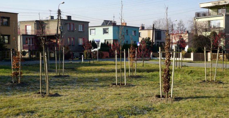 Gliwice jak dżungla? W mieście posadzono właśnie 1000 nowych drzew! (fot.UM Gliwice)