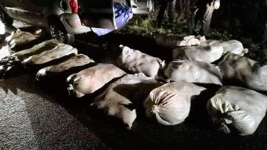 Ukradli 840 kg karpia, ryby przewozili w jutowych workach. Odpowiedzą za znęcanie się nad zwierzętami (fot.Policja Wielkopolska)