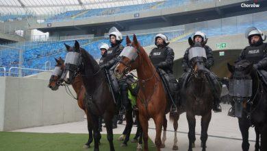 Rekrutacja do Policji Konnej w Chorzowie. Jacyś chętni? (fot. KMP Chorzów)