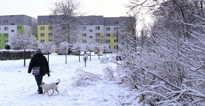 Polowaniem objęty zostanie kompleks leśny na południe od ul. Długiej w Tarnowskich Górach do ul. Suchogórskiej w Bytomiu