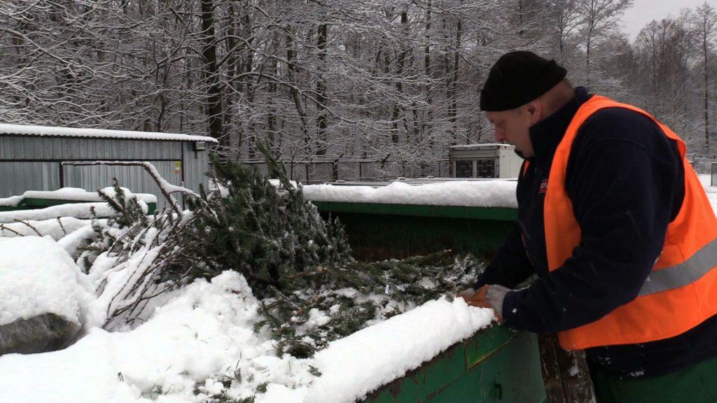 W większości miast, firmy, które zbierają choinki, przeznaczą je na kompost