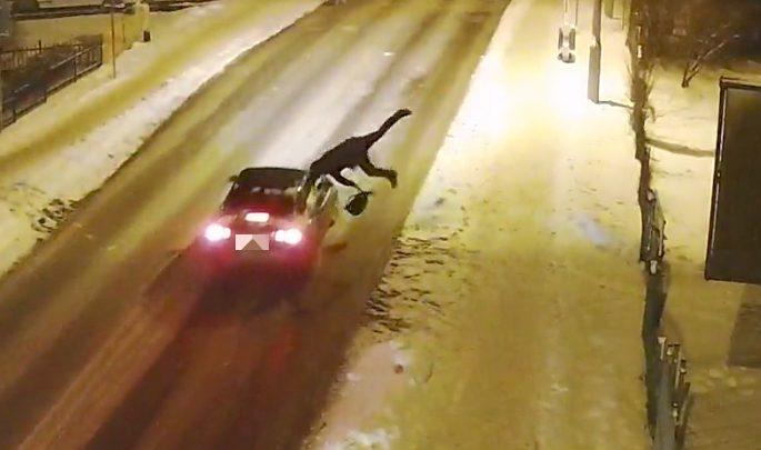 Wbiegł wprost pod nadjeżdżający samochód [WIDEO] Tak 48-letek skrócił sobie drogę do domu (fot. Policja Mazowiecka)