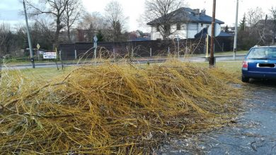 Gliwice: uszkodzili drzewa, urząd zawiadamia policję