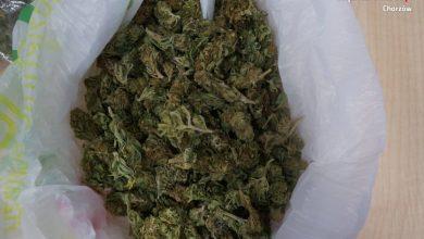 Kibole Ruchu Chorzów zatrzymani z narkotykami