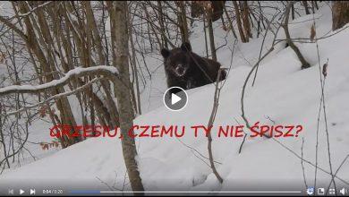 """Leśniczy spotyka misia: """"Grzesiu, czemu ty nie śpisz?"""" ;-) WIDEO to hit internetu! (fot.facebook/Nadleśnictwo Baligród, Lasy Państwowe)"""