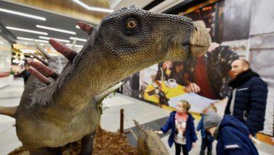 Skamieliny i dinozaury w Tychach. Możecie je obejrzeć do 31 stycznia (fot.mat.prasowe)