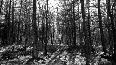 Urodziła dziecko, które ukryła w lesie, później w szafie. 18-latka z zarzutem dzieciobójstwa (fot.poglądowe/www.pixabay.com)